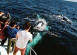 Crucero de medio día con avistamiento de ballenas y trayecto por el canal desde Surfers Paradise. Surfers Paradise, AUSTRALIA