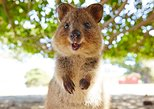 Rottnest Island Tour from Perth or Fremantle. Perth, AUSTRALIA