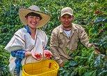 Recorrido sobre el café: Pruebe y viva la auténtica experiencia de café colombiano. Cali, COLOMBIA
