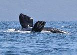 3 Hour Winter Whale Safari (May - Oct) around King George Sound. Albany, AUSTRALIA