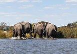 Chobe Safari Game Viewing from Victoria Falls, Cataratas Victoria, ZIMBABUE