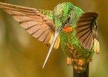 Birdwatching Minca. Santa Marta, COLOMBIA