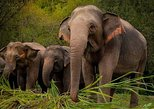 From Bangkok: Elephant Jungle Sanctuary Day Trip. Bangkok, Thailand