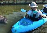 Thousand Islands Mangrove Tunnel/Manatee & Dolphin Kayak Tour!. Cocoa Beach, FL, UNITED STATES