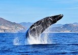 Cabo Group Whale Watching Tour. Los Cabos, Mexico