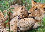 3 Days Tanzania Safari- Tarangire Np, Lake Manyara Np and Ngoronroro Crater. Moshi, Tanzania