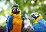 Wonderful Amazon: Nanay, Momon and Amazon River full day. Iquitos, PERU