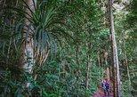 Selva de la meseta de Atherton por la noche de Cairns. Cairns y el Norte Tropical, AUSTRALIA