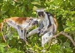 Jozani National Park. Zanzibar, Tanzania