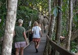 Daintree Rainforest and Cape Tribulation Tour from Cairns. Cairns y el Norte Tropical, AUSTRALIA