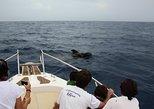 Avistamiento de cetáceos en Tenerife. Tenerife, ESPAÑA