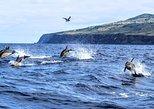 Whale watching / Observação de baleias e Golfinhos / Water4fun. Terceira, PORTUGAL