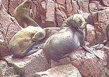 Islas Ballestas y Reserva Nacional de Paracas (Full Day). Paracas, PERU