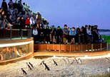 1 Day Exclusively Private Tour Of Phillip Island & The Penguin Parade, Melbourne, AUSTRALIA