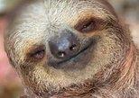 Monkey & Sloth Tour + Chocolate and Rum Tasting. Roatan, Honduras