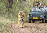 8 Days Private Golden Triangle Tour With Ranthambore, Nueva Delhi, INDIA