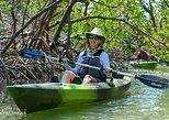 Mangrove Tunnels & Mudflats Kayak Tour. Naples, FL, UNITED STATES