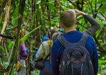 Dia inteiro, passeando pela vida selvagem e caminhadas na selva Yarapa.. Iquitos, PERU
