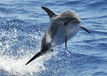 Dolphin and whale Safari. Gran Canaria, ESPAÑA