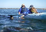 Pelican Point Kayaking / Sandwich Harbour 4x4 Combo Tour. Walvis Bay, Namibia