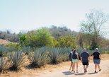 Aventura de senderismo de medio día a Vinata Los Osuna con comida mexicana,