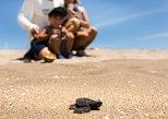 The Turtle Sanctuary Experience from Mazatlan. Mazatlan, Mexico