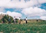 JATUN YAMPARA - Nucleo Indigena, Agroartesanal - Tours Half Day. Sucre, BOLIVIA