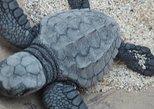 Sea Turtle Release Experience, Puerto Escondido, MÉXICO
