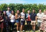 Half-Day Marlborough Wine Tour & Beer Tour, Blenheim, NUEVA ZELANDIA