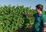 Vineyards tour & wine tasting near Varna,