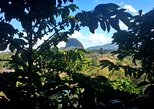 Guatape & Coffee Farm & Exotic Fruit Tasting: All in one great day. Medellin, COLOMBIA
