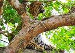 Isuru Safari, Parque Nacional Yala, SRI LANKA