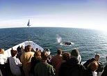 Cruzeiro de expedição para observação de baleias no inverno em San Diego. San Diego, CA, ESTADOS UNIDOS