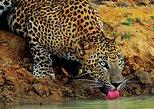 Yala Wild Adventure Safari, Parque Nacional Yala, SRI LANKA