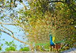 Safari at Wilpattu with Picnic and Meals - A Full Day Experience, Anuradhapura, SRI LANKA