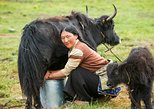 5-Days Tours: Tibetan Nomadic Life Experiences, ,