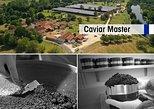 Visita a un criadero de esturiones con taller de caviar en Neuvic. Bergerac, FRANCIA