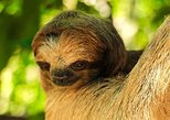 Roatan Monkey and Sloth Sanctuary, Roatan, HONDURAS
