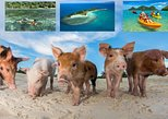 Pig Island Experience By Speed Boat, Snorkeling, Kayaking Relexing on the Beach. Koh Samui, Thailand