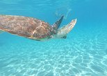 Snorkel with Sea Turtles - The Best way to spend a day in Curacao!. Curazao, BRAZIL