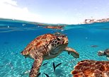 Swimming with sea turtles incl. pictures. Curazao, BRAZIL