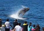 Tangalooma Island Resort Premium Dolphin Feeding Day Cruise with Whale Watching. Brisbane, AUSTRALIA