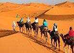 Paseo de camellos en Tanger. Tangier, MARRUECOS