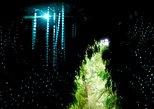 Glow Worm Cave Tour. Greymouth, New Zealand
