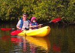 Kayak tours with Manatees and Dolphins. Cocoa Beach, FL, UNITED STATES
