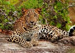 Yala National park with Experienced Driver/Guide - Private Tour. Parque Nacional Yala, Sri Lanka