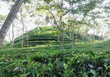 Srimangal Nature Tour in forest and tea garden, Dhaka, BANGLADES