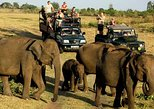 Udawalawe National Park Safari. Private full day tour from Bentota.. Bentota, Sri Lanka