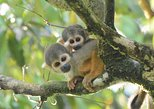 Private, All-Inclusive Grand Amazon Tour - 3 days, Iquitos, Peru. Iquitos, PERU