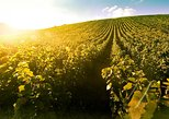 Private trip to home of Tokaj Aszu, with winetasting and guide!. Miskolc, Hungary